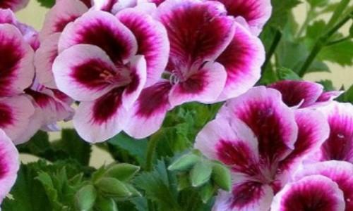 Erma Prod Com – Raiul florilor, la tine acasa!