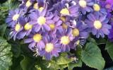 Producator flori Biosolaris – Da viata casei tale!