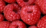 Puieti zmeura Strong Berry-Pentru o recolta bogata si delicioasa