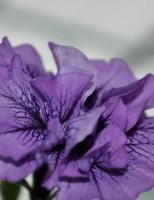 Bucura-te de frumusetea florilor cu Biosolaris!