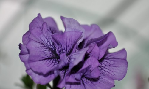 """<h2><a href=""""https://articole-noi.ro/bucura-te-de-frumusetea-florilor-cu-bisolaris/"""">Bucura-te de frumusetea florilor cu Biosolaris!</a></h2>Primul lucru care ne vesteste aparitia sezonului cald este aparitia florilor; fie ca vorbim despre ghiocei, clopotei sau florile de cires, nu exista bucurie mai mare decat cea pe care"""