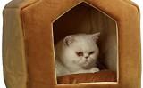 Cum sa cresti o pisica sanatoasa si fericita