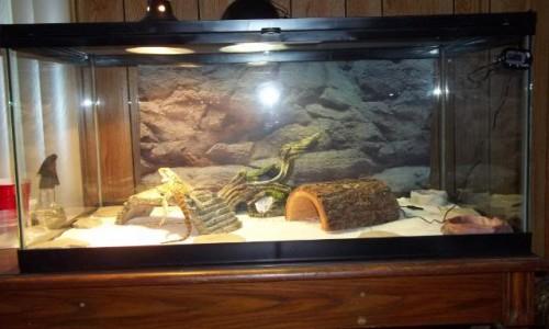Importanta iluminarii UV a terariului pentru reptile