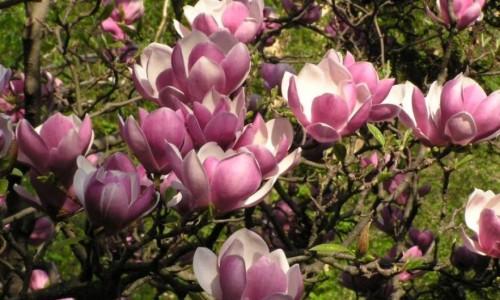 Plante ornamentale in marile orase