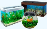 Acvatic Ecosistem-Ce trebuie sa stii despre acvarii pesti?