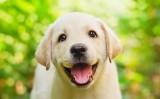 Petshopmall.ro-Ai grija de catelusul tau cu hrana caini Royal Canin!