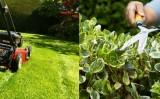Coman Spatii Verzi. 2 servicii de intretinere spatii verzi de care si tu ai nevoie