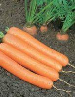 Seminte legume pentru gradinari mici si mari