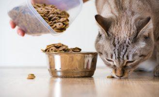O pisica sanatoasa si voioasa, cu o hrana uscata pentru pisici corespunzatoare