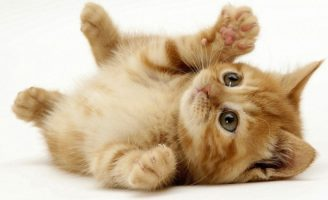 Felinele fericite se joaca fericite – accesorii tip jucarii pentru pisici