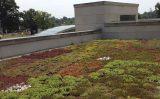 Un acoperis verde, dincolo de culoare