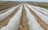 Utilaje horticultura: Tot ce trebuie sa stii despre foliile tunel