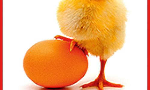 Pune bazele fermei tale avicole cu pui de o zi de la Vital best nutrition!