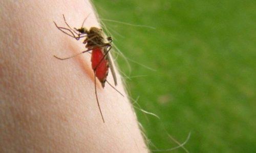 Virusul West Nile – crește numărul celor infectați